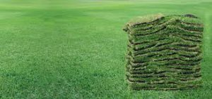 Welcome - ALL SEASON SOD AND LANDSCAPE, LLC